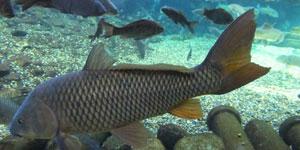魚類行動の時空間モデリング